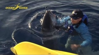 Kayak Fishing Battling a Huge Tuna