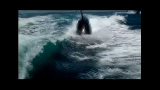 Amazing Encounter with a pod of Orca's in boat wake