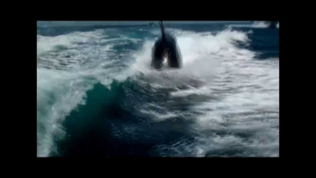 Amazing Encounter with a pod of Orca&#8217;s in boat wake