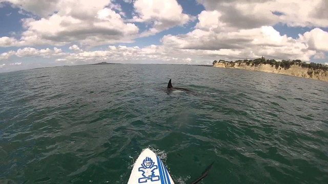 [SUP] Stand Up Paddling Encounter with an Orca