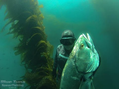 WSB – Spearfishing White Sea Bass