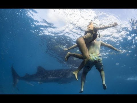 5 Horrific Shark Attacks Caught On Tape