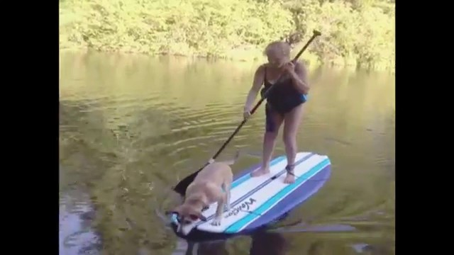Dog Reacts To Surfing With Grandma