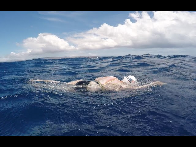 Woman survives shark scare during solo swim of Kaiwi Channel!
