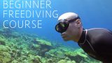 Beginner freediving course