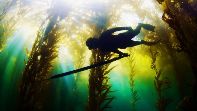 Harbor House Life: Bluewater Spearfishing California's El Niño
