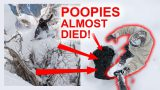 POOPIES ALMOST DIES IN JAPAN!!!